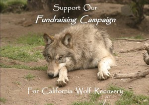 Photo uploaded by California Wolf Center