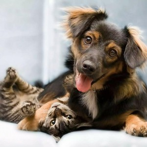 Photo uploaded by Ramona Animal Hospital