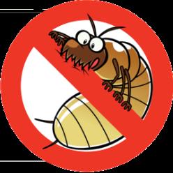 Casa Termite & Pest Control logo