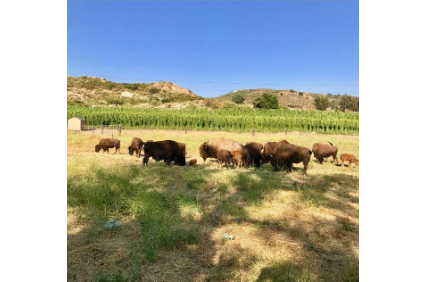Photo uploaded by Star B Bison Ranch & Hop Farm