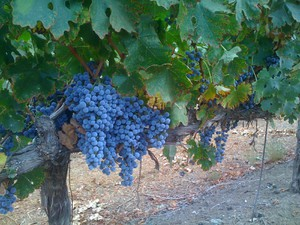 Photo uploaded by Schwaesdall Winery