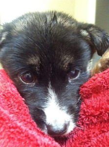 Photo uploaded by The Rescued Pup