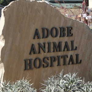 Photo uploaded by Vca Adobe Animal Hospital