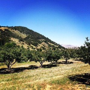 Photo uploaded by Volcan Mountain Winery